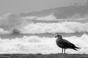 La dureza de las olas